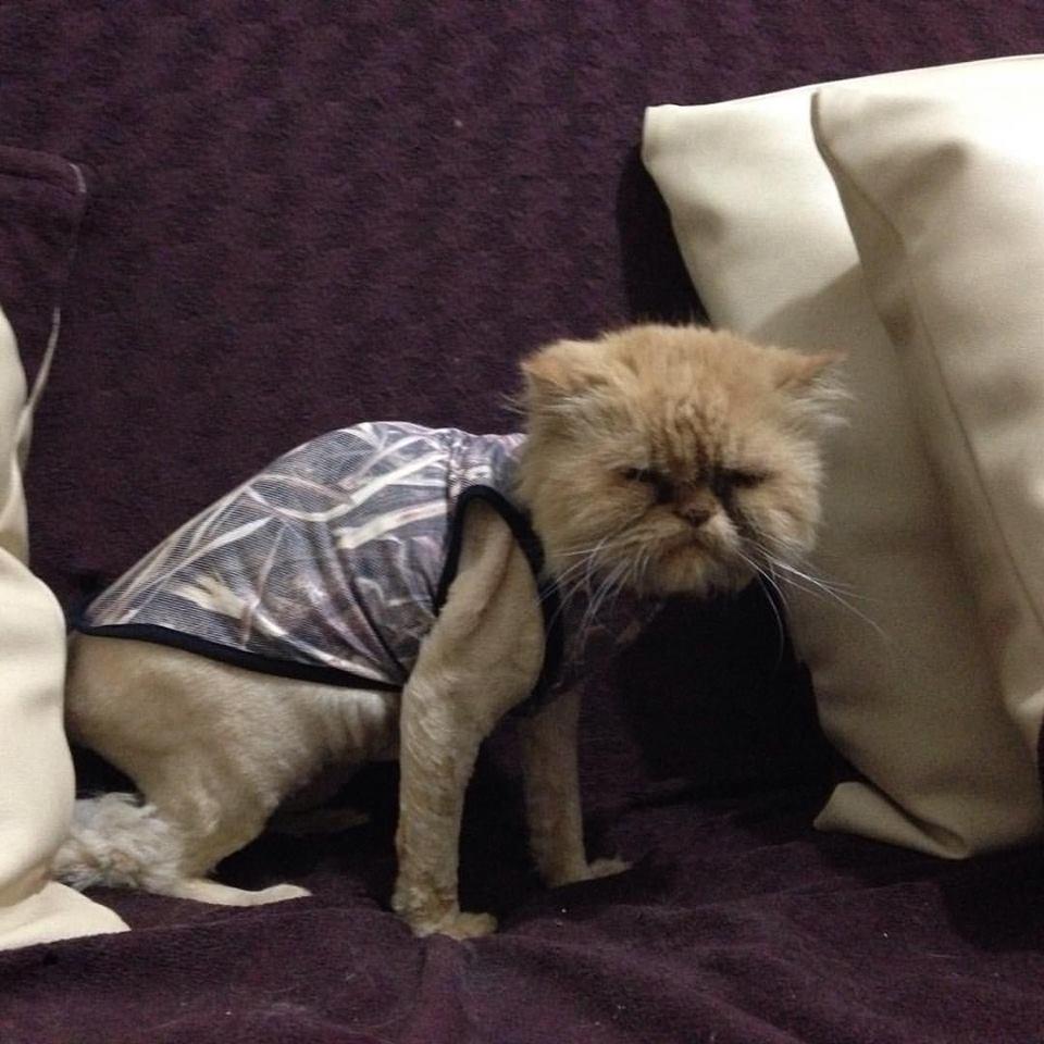 kedi Chanel